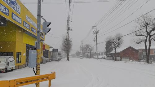 久しぶりの雪!
